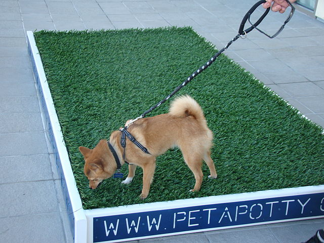 How to Use Dog Training Pads