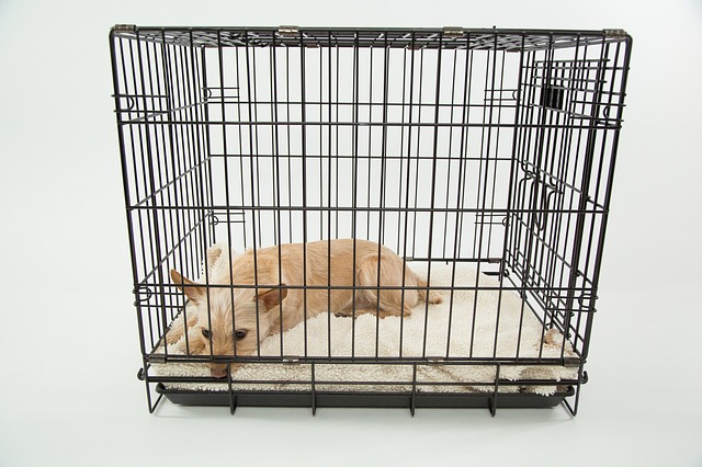 crate train a dog for potty training