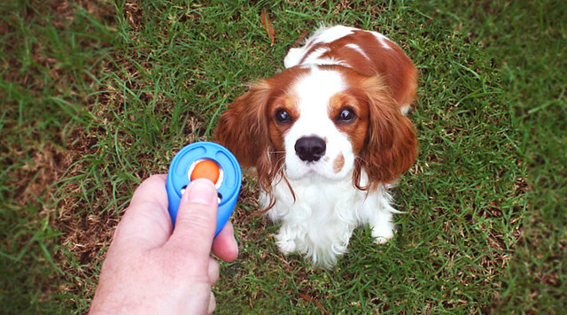 what is clicker dog training